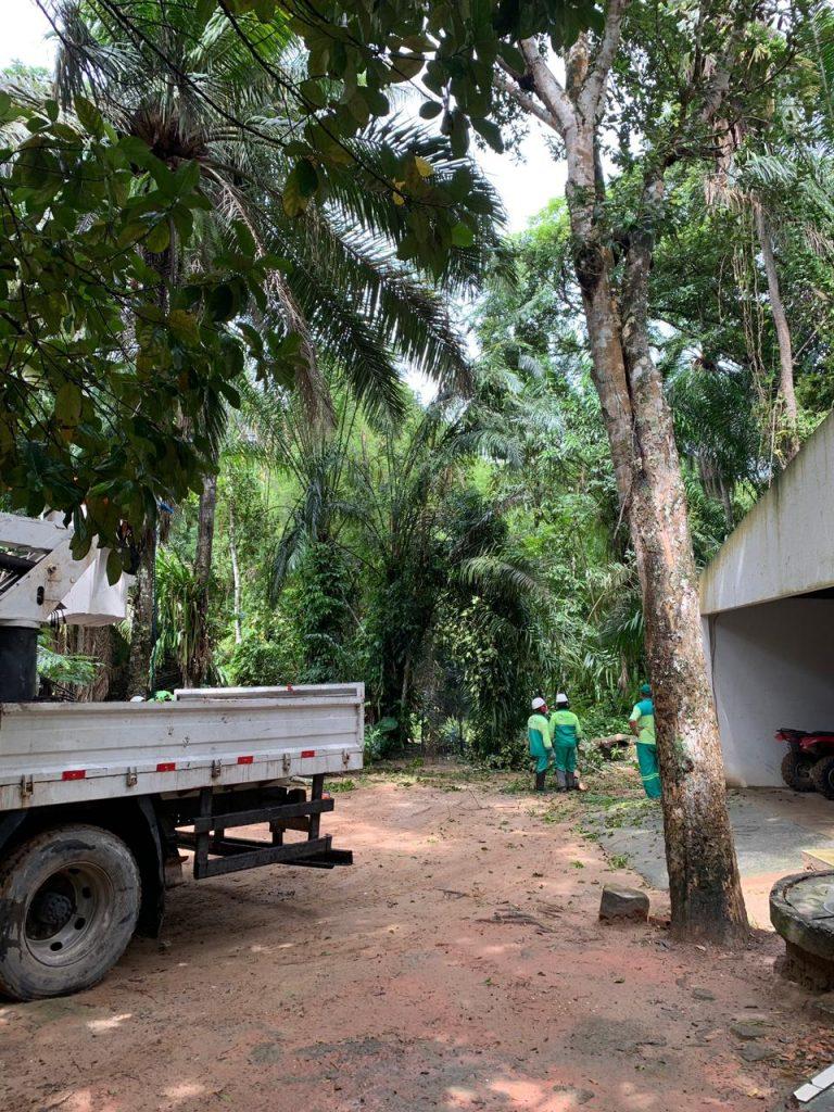 Funcionários fizeram a poda das árvores próximas as áreas comuns - Foto: Ascom Sudes