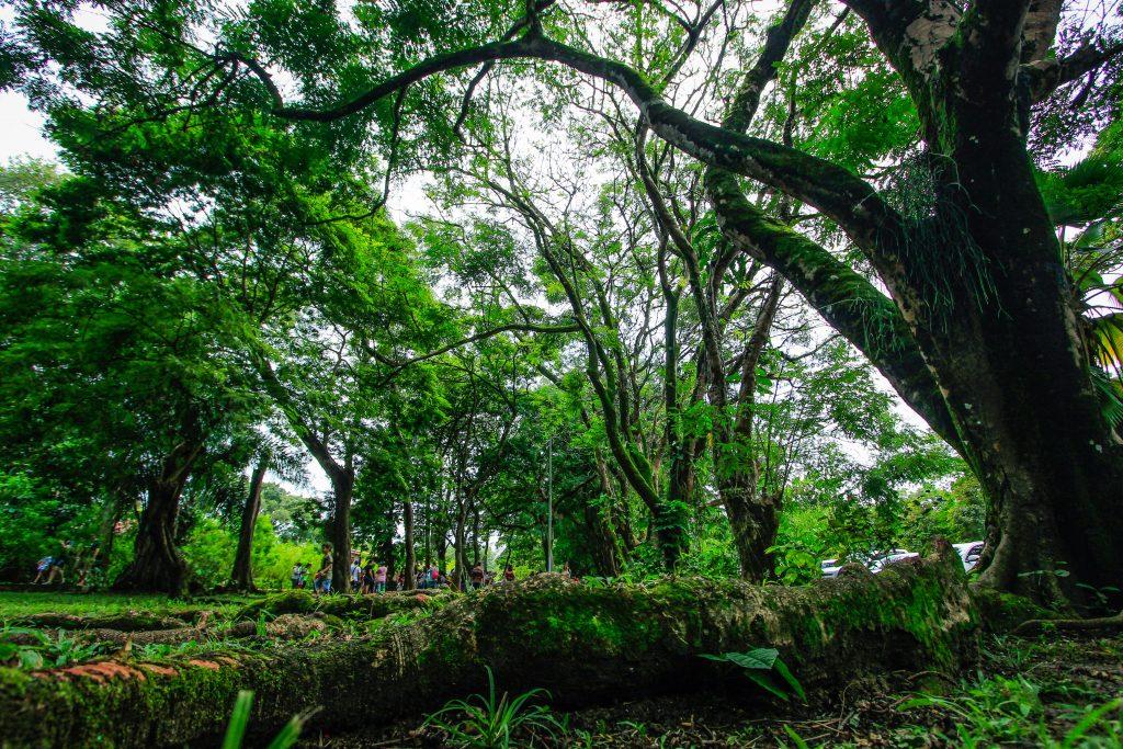 Parques de Maceió reabrem aos fins de semana. Foto: Secom Maceió